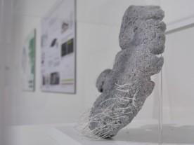 Tales of a Sea Cow, Steller's Sea Cow lip and vibrissae, Sculpture, Silicone, pigments et matériaux mixtes, 2012
